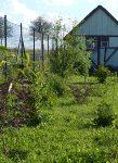 Strauchreihe - dürfte gern schneller wachsen ;-)