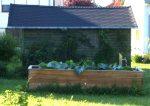 Hochbeet mit Zucchini und Hokkaido-Kürbis