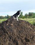 Von da oben kann hund besser ein Nachbarhuhn aussuchen. :-)