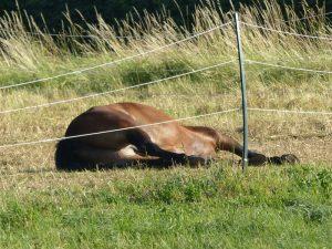 Nachbar Pferd hat es sich gemütlich gemacht