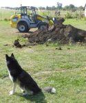 Pause. Hund darf gucken, was los ist. ;-)